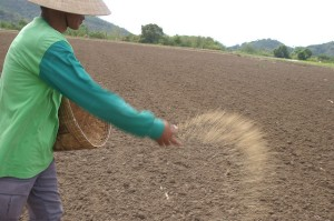 Sowing-Rice